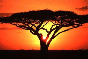 Znaczenie snu Afryka