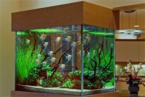 Znaczenie snu akwarium