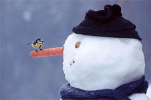Bałwan ze śniegu 36