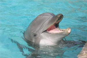Delfin 23