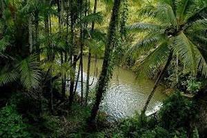 Dżungla 15