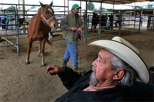Handlarz końmi