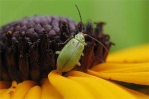 Znaczenie snu insekty