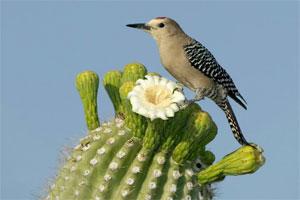 Znaczenie snu kaktus