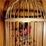 Klatka na ptaki