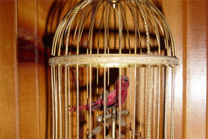Znaczenie snu klatka na ptaki