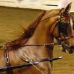 Końska uprząż
