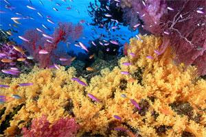 Znaczenie snu koralowiec