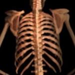 Kości