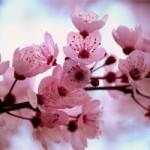 Kwitnąć