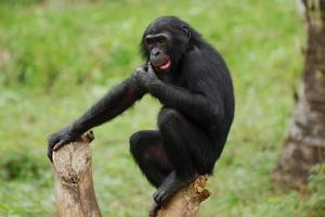 Małpa Sennik - Znaczenie snu Małpa