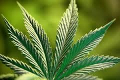 Znaczenie snu marihuana