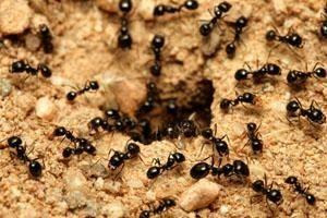 Znaczenie snu mrówki