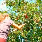 Ogród owocowy