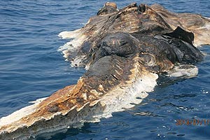Potwór morski 29