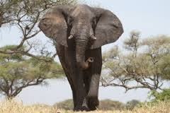 Znaczenie snu słoń