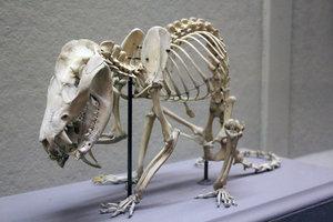 Szkielet 2