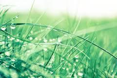 Znaczenie snu trawa