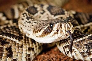 Znaczenie snu wąż