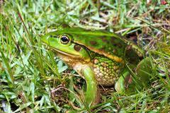 Znaczenie snu żaba