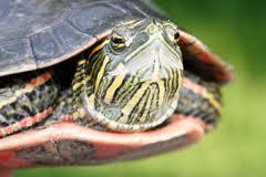 Znaczenie snu żółw