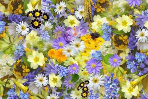 Kwiaty w snach