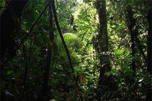 Sen o dżungli