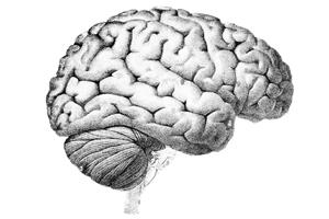 Sen o mózgu