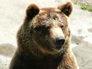Sen o niedźwiedziu
