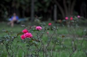 Sen o ogrodzie