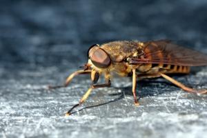 Sen o owadach