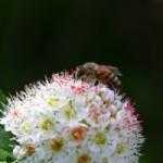 Sen o pszczole